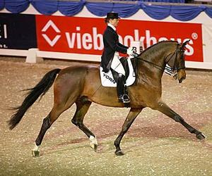 beautiful, horse, and competition image