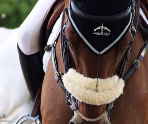 dressage, horse, and beauti image