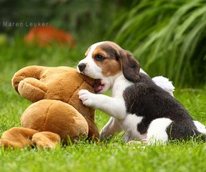 beagle and dog image