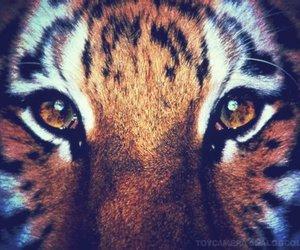 tiger, eyes, and animal image