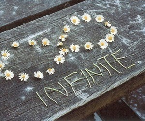 infinite, flowers, and infinity image