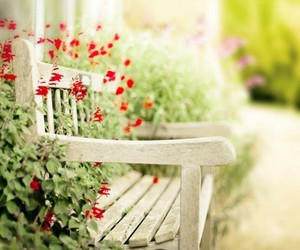 flowers and bench image