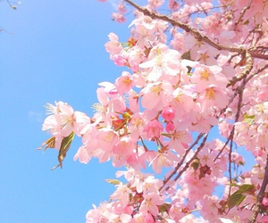 flowers, summer, and blossom image