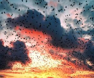 bird, sky, and sunset image