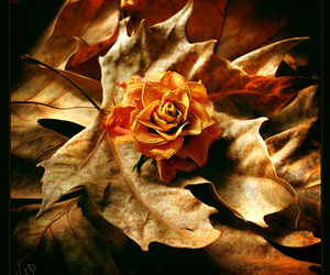 leaves and rose image