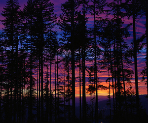 tree, sunset, and forest image
