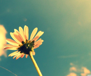 flowers, summer, and sky image