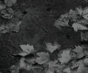 black and white, leaf, and leaves image
