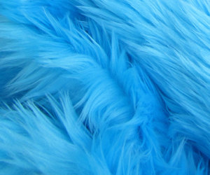 blue and fur image