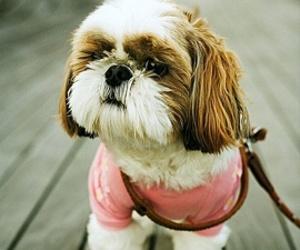beautiful, dog, and francia image