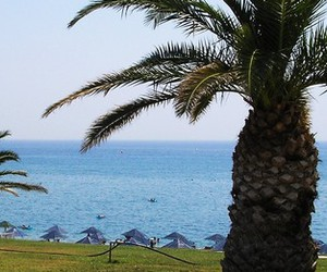 Greece, palm, and rhodos image