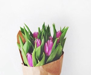 flowers, background, and tulips image