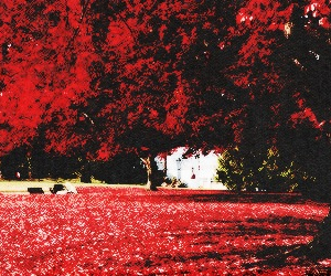 header, red, and trees image