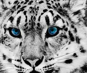 animal, blue, and eyes image