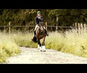 animal, dressage, and equestrian image