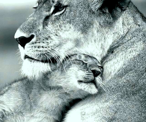 adorable, cub, and cuddling image