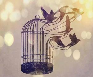 bird, free, and art image