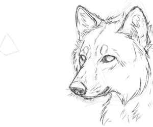 draw, wolf, and wow image