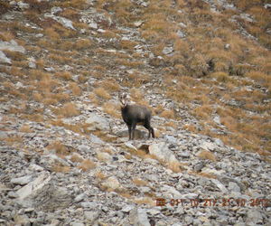 nature, :*, and chamois image