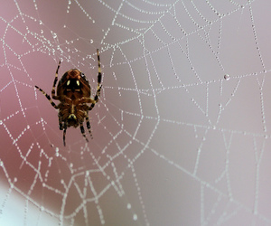 animal, dewdrops, and spiderweb image