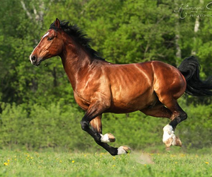 brave, equestrian, and equine image