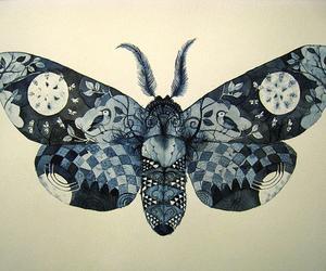 illustration and moth image