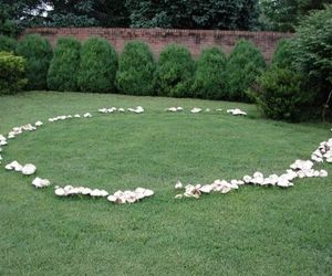 mushroom, fairy ring, and fairy image