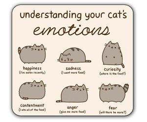 cat, emotions, and cute image