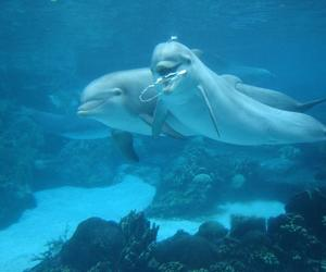 beautiful, water, and dolphin image