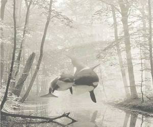 floating, forest, and foggy image