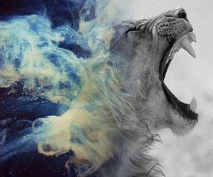 lion, blue, and roar image