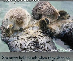 love, cute, and otter image