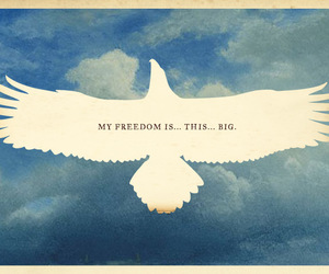 freedom, bird, and sky image