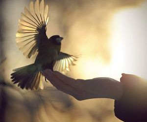 bird, hand, and fly image
