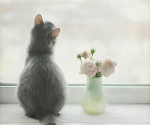 cat, flowers, and window image