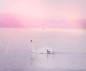 Swan, pink, and pastel image
