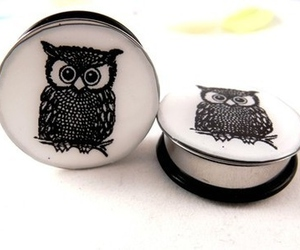 owl and Plugs image