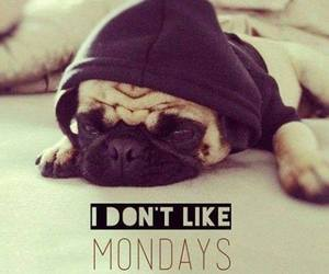monday, dog, and hate image