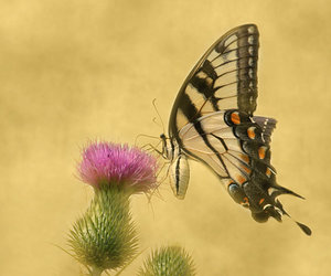 bug, butterfly, and flower image