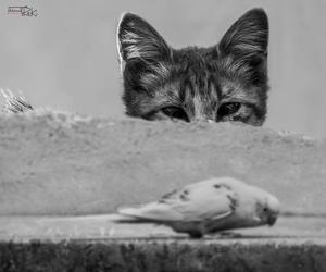 bird and cat image