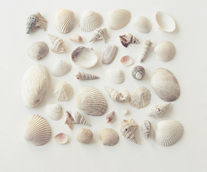 shell, summer, and seashells image