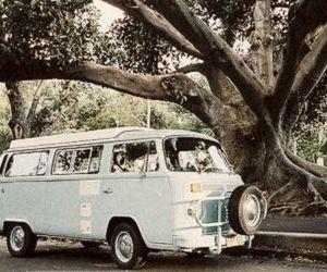 vintage and tree image