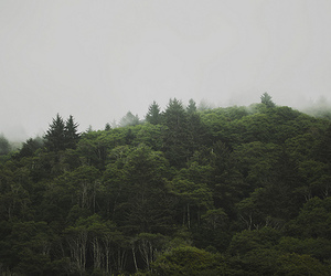 forrest, green, and indie image