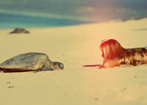 beach, girl, and turtle image