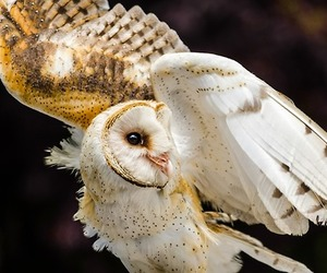 owl, bird, and animal image