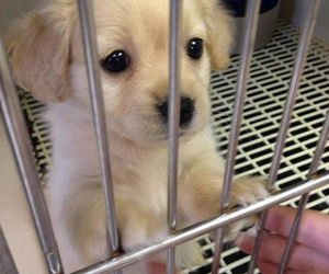 aww, tumblr, and puppy eyes image