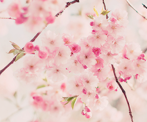 flowers, pink, and Dream image