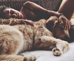dog, summer, and friends image