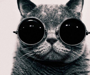 black and white, hipster, and cat image