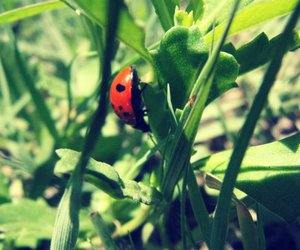 bug, grass, and nature image